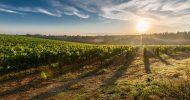 Bild Weinzeit entlang der Elbe - Ausflug im Oldiebus