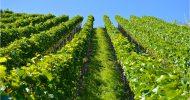 Bild Wein Erlebnisse