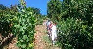Bild Weinterrassen Tour mit Weinverkostung