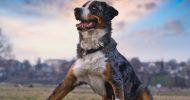 Bild Hunde Fotoshooting in Dresden